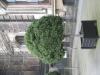 Pflanzen-Baum-Foto_Textur_B_3617