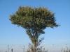 Pflanzen-Baum-Foto_Textur_B_3730
