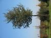 Pflanzen-Baum-Foto_Textur_B_3734