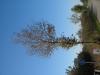 Pflanzen-Baum-Foto_Textur_B_3735