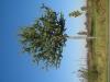 Pflanzen-Baum-Foto_Textur_B_3738