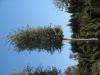Pflanzen-Baum-Foto_Textur_B_3740