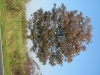Pflanzen-Baum-Foto_Textur_B_3756