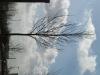 Pflanzen-Baum-Foto_Textur_B_41200