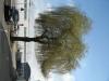 Pflanzen-Baum-Foto_Textur_B_41240