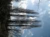 Pflanzen-Baum-Foto_Textur_B_41310