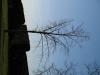 Pflanzen-Baum-Foto_Textur_B_42070