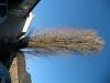 Pflanzen-Baum-Foto_Textur_B_42250