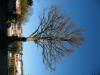 Pflanzen-Baum-Foto_Textur_B_42300