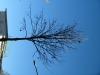 Pflanzen-Baum-Foto_Textur_B_42350