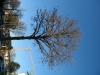 Pflanzen-Baum-Foto_Textur_B_42380