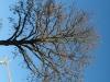 Pflanzen-Baum-Foto_Textur_B_42390
