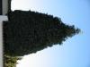 Pflanzen-Baum-Foto_Textur_B_42430