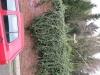 Pflanzen-Baum-Foto_Textur_B_42870