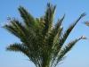 Pflanzen-Baum-Foto_Textur_B_7687