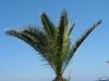 Pflanzen-Baum-Foto_Textur_B_7689