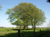 Pflanzen-Baum-Foto_Textur_B_P5032296