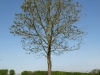 Pflanzen-Baum-Foto_Textur_B_P5032302