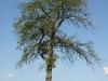 Pflanzen-Baum-Foto_Textur_B_P5032304