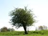 Pflanzen-Baum-Foto_Textur_B_P5032334