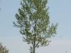 Pflanzen-Baum-Foto_Textur_B_P5042365