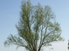 Pflanzen-Baum-Foto_Textur_B_P5042370