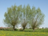 Pflanzen-Baum-Foto_Textur_B_P5042374