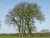 Pflanzen-Baum-Foto_Textur_B_P5042378