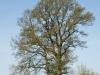 Pflanzen-Baum-Foto_Textur_B_P5042380