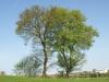 Pflanzen-Baum-Foto_Textur_B_P5042381