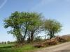 Pflanzen-Baum-Foto_Textur_B_P5042393