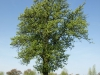 Pflanzen-Baum-Foto_Textur_B_P5042403