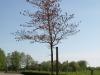 Pflanzen-Baum-Foto_Textur_B_P5042424