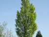 Pflanzen-Baum-Foto_Textur_B_P5042441