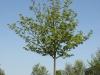 Pflanzen-Baum-Foto_Textur_B_P5042446