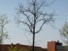 Pflanzen-Baum-Foto_Textur_B_P5042447