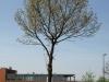 Pflanzen-Baum-Foto_Textur_B_P5042449