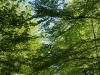 Pflanzen-Baum-Foto_Textur_B_P5042456