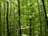 Pflanzen-Baum-Foto_Textur_B_P5042459