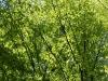 Pflanzen-Baum-Foto_Textur_B_P5042461