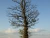 Pflanzen-Baum-Foto_Textur_B_P5122738