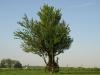 Pflanzen-Baum-Foto_Textur_B_P5142752