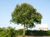 Pflanzen-Baum-Foto_Textur_B_P5142754