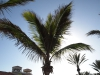 Pflanzen-Baum-Foto_Textur_B_P5224076