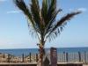 Pflanzen-Baum-Foto_Textur_B_P5244903