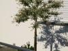 Pflanzen-Baum-Foto_Textur_B_P6153456