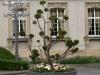 Pflanzen-Baum-Foto_Textur_B_P6153501