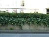 Pflanzen-Baum-Foto_Textur_B_P6223635