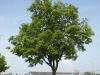 Pflanzen-Baum-Foto_Textur_B_P6288483