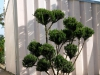 Pflanzen-Baum-Foto_Textur_B_P6293856